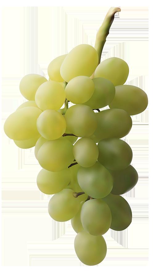 racimo-de-uvas-blancas-galan-de-membrilla